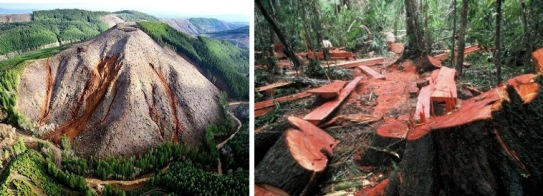 Illegal and unethical logging practices exemplified here are unsustainable and can potentially cause landslides.