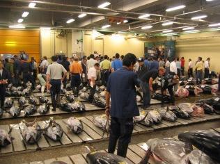 Fresh Tuna Auction at the Tsukiji Market