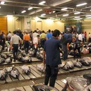 Fresh Tuna Auction at the Tsukiji Market
